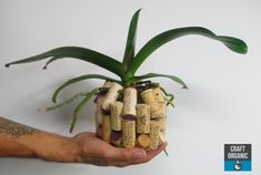 Orchid basket made of wine corks. #corks #orchids #tillandsia