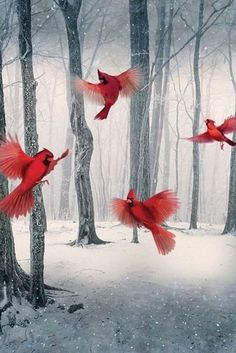 Kinds Of Birds, All Birds, Beautiful Birds, Animals Beautiful, Beautiful Scenery, Simply Beautiful, Beautiful Places, Native American Pictures, Winter Painting