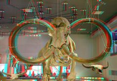 The Mammoet - 3D Anaglyph Photography.