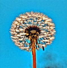 Macro, dandelion, flower, nature, blue, colorful,