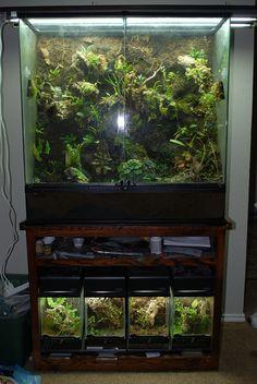 Fish Aquarium Decorations, Aquarium Fish, Frog Terrarium, Terrarium Ideas, Frog Tank, Reptile Room, Animal Room, Tank Design, Reptile Enclosure