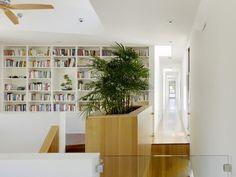 Palma doniczkowa w domu – kilka pomysłów | Bambusowy sen - wszystko o bambusach ogrodowych i palmach
