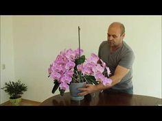 Orchidea – kráľovná izbová rastlín. V skutočnosti jej stačí málo a odvďačí sa vám skutočne krásne – bohatým kvitnutím. Toto radí pestovateľ, ktorý sa môže pochváliť úžasne rozkvitnutými kúskami. Hovorí, že orchidea môže kvitnúť aj pol roka vkuse! Každá orchidea potrebuje pre kvitnutie tieto 4 veci: dobrú pôdu, zavlažovanie, prijateľnú vlhkosť, vhodné osvetlenie a výživu.... Propagation, My Flower, Container Gardening, Gardens, Plant, Orchids, Container Garden