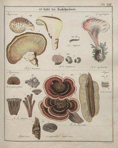 Das System der Pilze und Schwämme, 1817 f by peacay, via Flickr