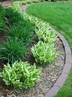 Steal these cheap and easy landscaping ideas for a beautiful backyard. Get our best landscaping ideas for your backyard and front yard, including landscaping design, garden ideas, flowers, and garden design. Front Garden Landscape, Small Front Yard Landscaping, House Landscape, Outdoor Landscaping, Outdoor Gardens, Landscape Designs, Landscaping Edging, Florida Landscaping, Simple Landscape Design