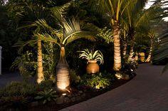 Tropical garden Lighting - Landscaping Sarasota Florida with Tropical Palm Trees Palm Trees Landscaping, Florida Landscaping, Florida Gardening, Tropical Landscaping, Tropical Plants, Tropical Gardens, Landscaping Ideas, Landscaping Software, Driveway Landscaping