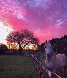 Horse and sunset Cute Horses, Pretty Horses, Horse Love, Beautiful Horses, Animals Beautiful, Cavalo Wallpaper, Foto Cowgirl, Animals And Pets, Cute Animals