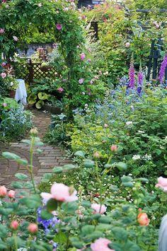 5月のあの日に帰れたら・・・ - 薔薇つくりは庭つくり