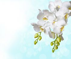 Desktop wallpaper Flowers: Orchids, White, Background - free download. | Desktop-on-stol.com
