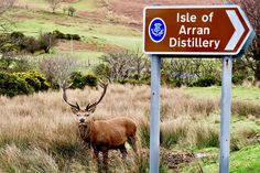 Scotland, Deer, Scotland, Surprise #scotland, #deer, #scotland, #surprise