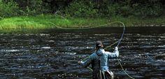Flugfiske i Ammerån
