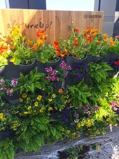 Il y a plusieurs façons de créer un mur végétal en intérieur ou en extérieur, ici, le kit pour mur végétal de Gardena (Nature Up !) permet, par un simple jeu d'empilement de pots, de composer un décor végétal avec les plantes de votre choix (avec système d'irrigation fourni). #mur #végétal #kit #gardena #plantes #balcon