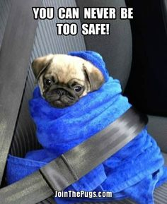 Baby puglets are so fragile.