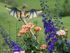 Dragon Gardens and Little gardens on Pinterest