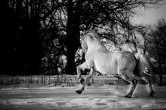 Castor by Heléne Jonsson on 500px