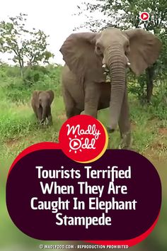 Kruger National Park, National Parks, Different Types Of Animals, Wild Elephant, T Play, Closer To Nature, Extinct, Endangered Species, Nature Animals