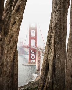 """Matt Fraser on Instagram: """"Another edition of where to end up if you want to feel something.  mattfraser9.com // @onlyinsf  @sanfranciscoworld @thesanfrancisco…"""""""