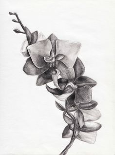 black and white orchid tattoos black n white tattoos pinterest orchid tattoo white. Black Bedroom Furniture Sets. Home Design Ideas