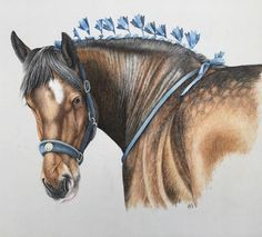 Strength & Beauty #horseart10 #instaart #artsy #equineart #equine #horse #drawing #masterpiece #instart #shirehorse