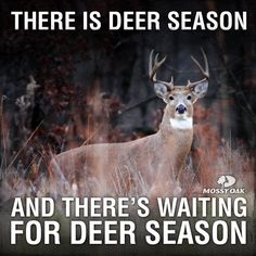 There are two seasons: deer season and waiting-for-deer season.