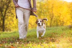 Why Walking Your Dog Should Become A Daily Habit