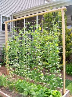 Diy Garden Trellis Ideas Diy garden trellis out of pressure treated wood and cattle fencing 17 exceptional diy trellis ideas for you garden diy garden vertical workwithnaturefo