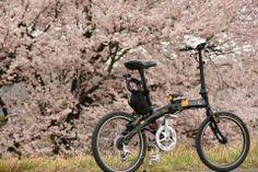 Copyright © おくっち 様 / 2006年 Mu C9 / 毎年、桜の時期はカメラ持ってMuC9で早朝ポタリングしてます。