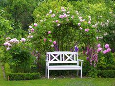 Rose mit Begleiter - Bilder und Fotos