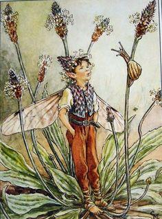 Flower-fairie