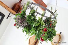 Pikkutalon elämää: Yrtit kuivumassa Natural Medicine, Herbs, Nature, Plants, Naturaleza, Herb, Plant, Natural Home Remedies, Nature Illustration