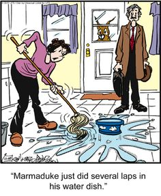 How does this always happen?  Marmaduke isn't the only one who plays in his water dish.