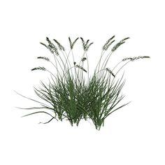 WishingonaStarr_CU4CU_Native American grass.png ❤ liked on Polyvore
