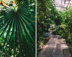 Escapade autour de Toronto - les jardins botaniques d'Hamilton Escapade, Botanical Gardens, Hamilton, Toronto, Plant Leaves, Sidewalk, Plants, Side Walkway, Walkway