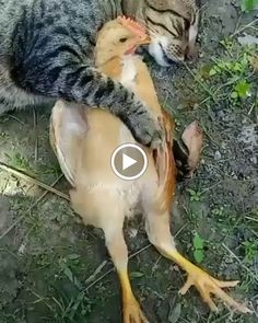 Funniest Videos Laughs Everyday on 24 Hours - Laughest Video Jokes Videos, Best Funny Videos, Funny Valentine, Funny Quotes, Funny Humor, Funny Moments, Picture Quotes, Lol, Pictures