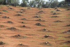 Mediterranean soils | G-Soil