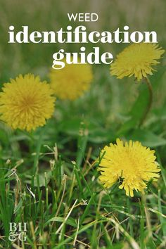 Use our garden weed guide to identify weeds by appearance and learn how to quickly remove weeds safely. Get your garden to be the best it can be! #gardening #gardenideas #gardenweeds #howtogetridofweeds #bhg