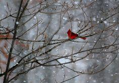 Photography by David Feldkamp  Columbus, Ohio