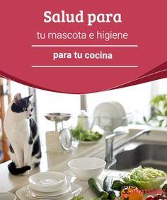 Salud para tu mascota e higiene para tu cocina  Las mascotas y los niños son la luz del hogar, te damos algunas pautas para mantener la higiene en tu cocina y de salud para tu mascota. #higiene #cocina #mascota #consejos