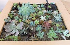 Copy Cat Chic: #DIY Outdoor Succulent Wall #LowesCreator