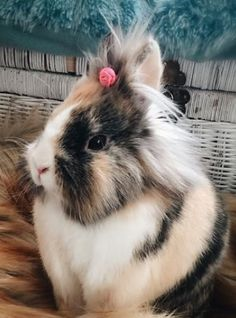 What a sweet bunny girl.