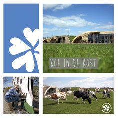 Bij Koe in de Kost slaap en leef je op de boerderij van Frans en Truus. Zij vertellen met passie over hun bedrijf en je slaapt in een Grondulow. Midden in het weiland van de koeien en opgebouwd uit duurzame materialen. Samen met Frans kun je helpen met het verzorgen van de koeien. Erg leuk om te doen met kinderen!