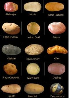 Yams Vs Sweet Potatoes, Types Of Potatoes, Fruits And Veggies, Fruits And Vegetables, Potato Varieties, Vegetable Design, Organic Market, Best Food Ever, Snack