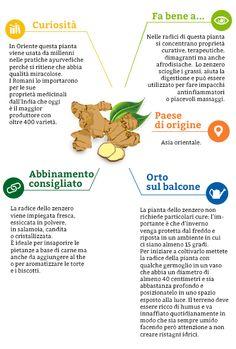 Le mille virtù benefiche dello #zenzero. Ecco qualche #curiosità in più: http://www.dimmidisi.it/it/dimmidipiu/cose_buone/article/le_mille_virtu_benefiche_dello_zenzero.htm - #alimentazione #food #ginger #infografica #infographic