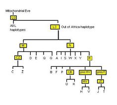 Mitochondrial DNA is a DNA that is only inherited from mother to child, and it tracks back to the most recent common female ancestor of all humans (Mitochondrial Eve). I have collected a few items … Human Dna, Human Genome, Mitochondrial Eve, Dna Drawing, Dna Facts, Dna Genealogy, Family Research, Dna Test, History Facts