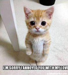 Super cute animals, animals and pets, curious cat, kittens cutest, cats and Funny Animal Jokes, Funny Cat Memes, Cute Funny Animals, Funniest Animals, Cats Humor, Memes Humor, Funny Horses, Funny Humor, Clean Animal Memes