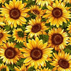Bountiful Harvest Sunflowers With Metallic Fabri-Quilt Fabrics /// 📌 A field of SunFlowers quilt ‼ Gives me goose bumps it's so pretty 💚 Big Smile :-) Wild Sunflower, Sunflower Quilts, Sunflower Pattern, Painting Inspiration, Art Inspo, Sunflower Illustration, Sunflower Wallpaper, Aesthetic Drawing, Cool Art