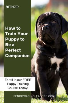 In our FREE puppy training course we'll break down and cover the important principles of dog socialization, manners, and obedience. Enroll today and train your puppy to become a perfect companion. From Fenrir Canine Leaders. Puppy Toilet Training, Training Your Puppy, Dog Training Tips, Cane Corso Dog Breed, Mastiff Dog Breeds, Best Guard Dog Breeds, Best Guard Dogs, Socializing Dogs, German Shepherd Training