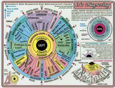 HEALING WAYS: IRIDOLOGY CHART