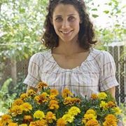 How to Propagate Marigolds from Cuttings | eHow