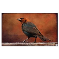 'Cowbird in Autumn' by Lois Bryan Photographic Print on Canvas